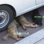 [猫] 車のメンテはにゃんでもおまかせ♪